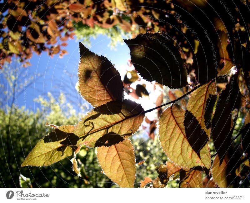 Autumn in summer Summer Tree Leaf Light Sky Sun Shadow Hiding place Protection Flare fluoroscopy