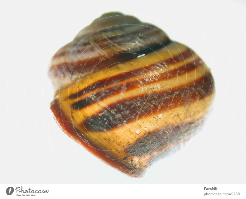 Animal Snail Snail shell