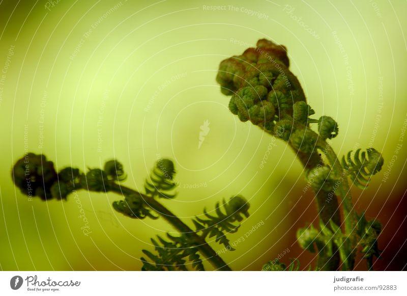 Nature Green Plant Life Power Growth Fist Shoot Pteridopsida Flourish Plantlet Convoluted