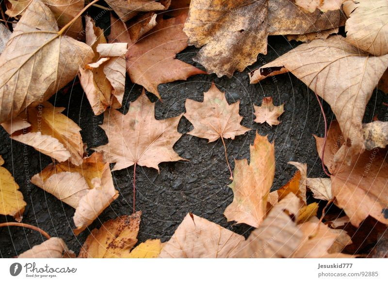 The Couple Leaf Autumn 3 Heap Small Large Yellow Places Earth as folded Street muddled Orange To fall Lie Classification