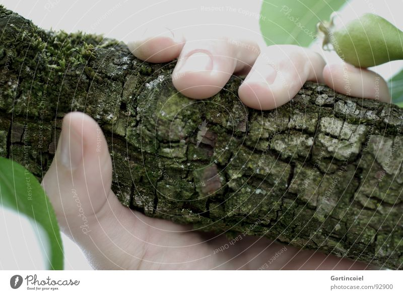 Of course. Skin Human being Hand Fingers Tree Wood To hold on Fingernail Tree bark Door handle Enclose Branch Twig Colour photo Subdued colour Exterior shot