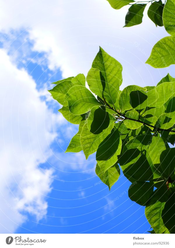 Summertime? Leaf Jump Spring Nature Tree Sky Clouds Green Physics Multiple Plant Photosynthesis Fresh Botany Part of the plant Verdant Bushes Undergrowth Near