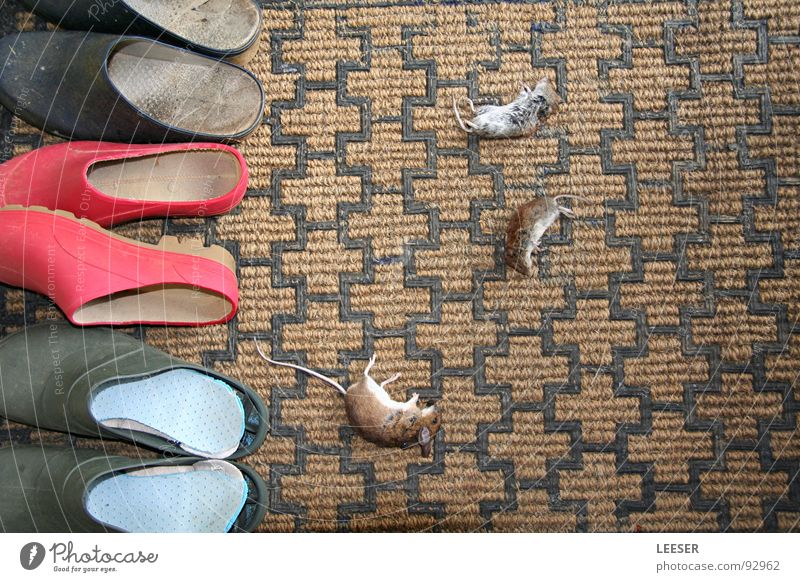 Hangover breakfast. Domestic cat Cat's paw Doormat Slippers Footwear Death Animal To feed Souvenir Watchfulness Pelt Mammal Grief Distress Transience Mouse