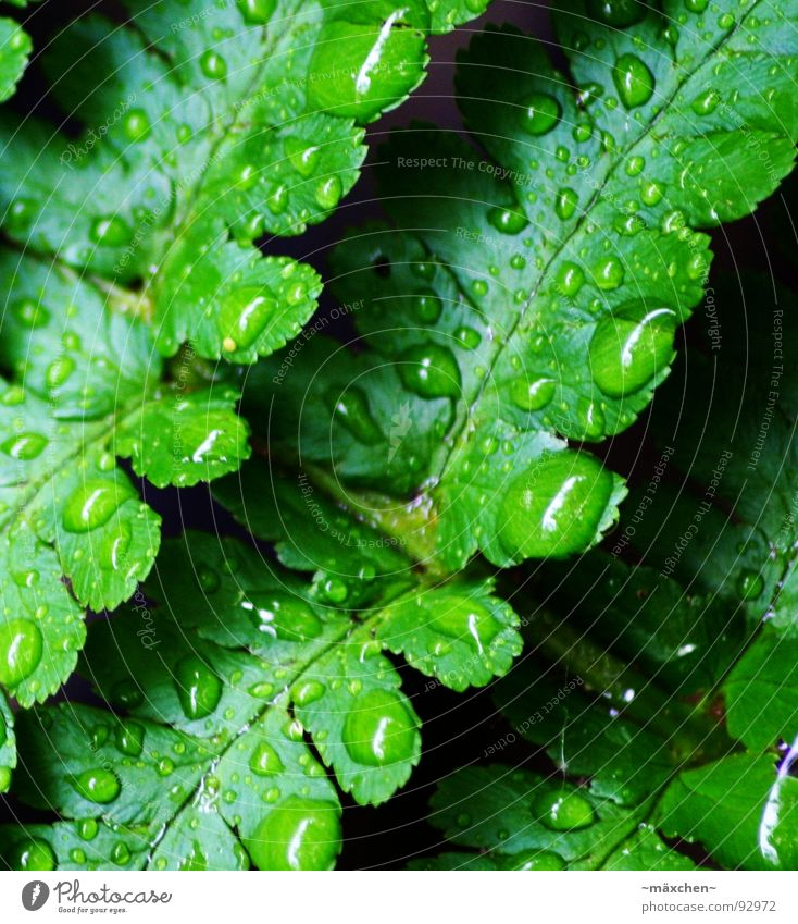 Water Tree Green Plant Spring Rain Glittering Wet Round Damp Refreshment Vessel Sharp-edged Refrigeration Gaudy