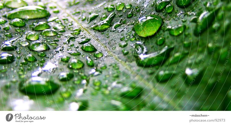 Plant Green Water Leaf Glittering Rain Wet Round Refreshment Sharp-edged Damp Vessel Gaudy Refrigeration Good deed