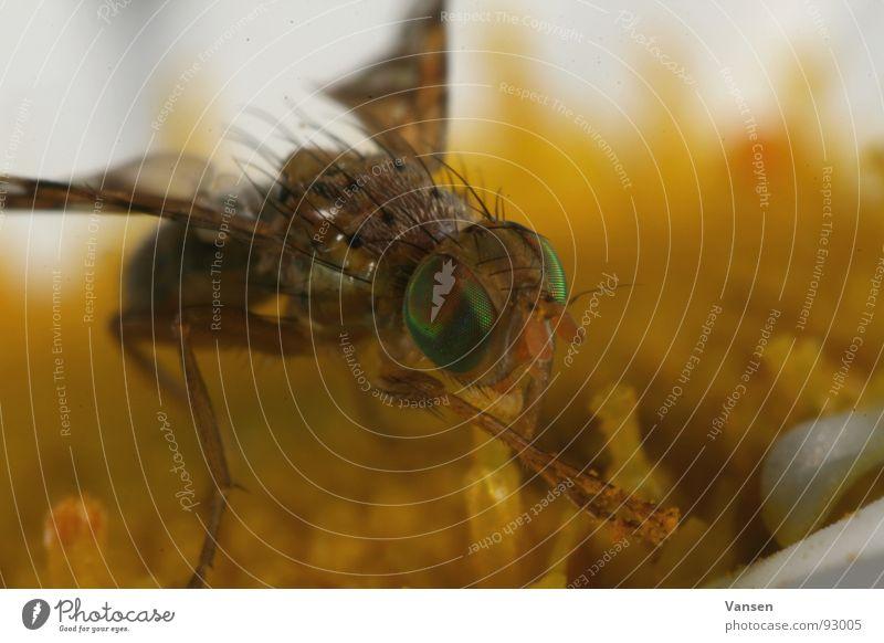 Green Blossom Orange Fly Stamen Trunk Nectar Compound eye