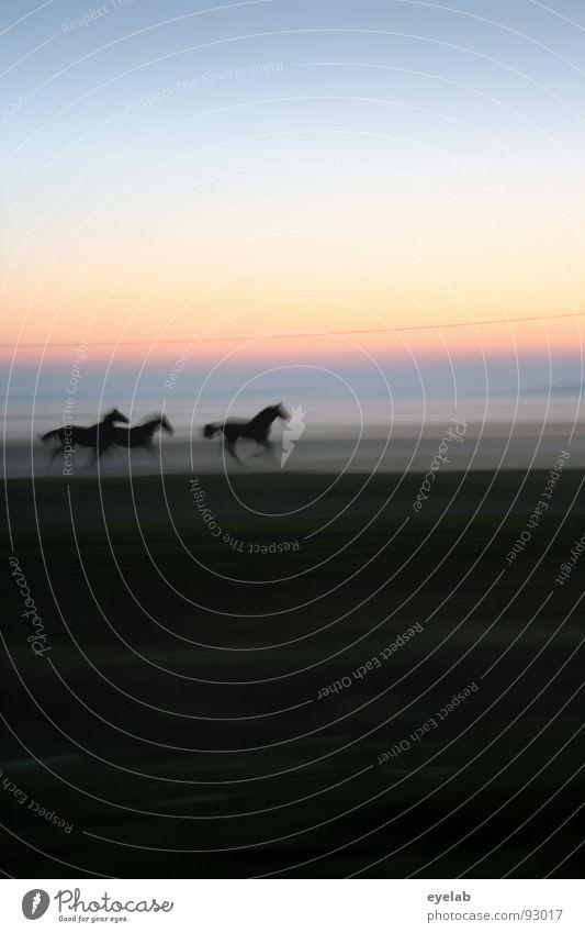 Sky Green Summer Sun Loneliness Animal Black Baby animal Meadow Movement Grass Freedom Moody Horizon Weather Fog