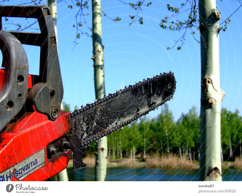 chainsaw massacre Saw Wood Chainsaw Red Force Dangerous Logging Cut down Woodcutter Tree Birch tree Lake Forest Machinery Tool Exterior shot Brandenburg