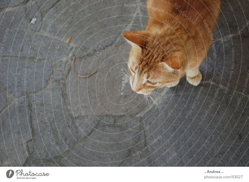 Red Tiger Ear Cat Stone Stone floor Whisker Mammal red cat mackerelled nikon d80 Colour photo