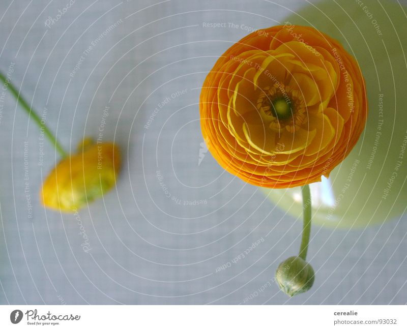 Flower Green Plant Summer Calm Death Blossom Spring Orange Table Circle Kitchen Round Open Things Friendliness