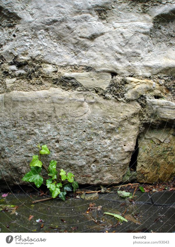Water Green Plant Cold Wall (building) Garden Gray Stone Wall (barrier) Park Rain Power Wet Rock Hope Growth