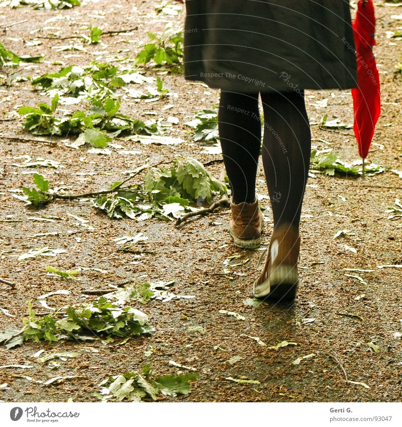 Woman Red Leaf Movement Garden Park Legs Adults Going Grief To go for a walk To fall Branch Umbrella Gale Distress
