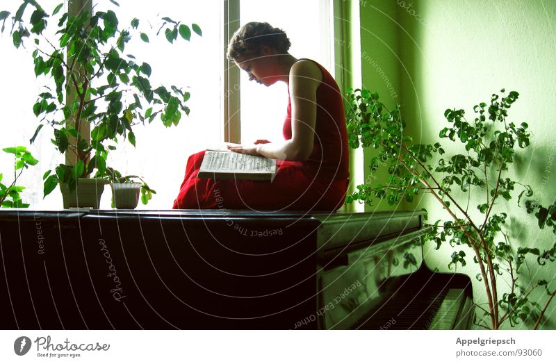 winged Piano Book Green Black Groomed Calm Doze Window Wallpaper Flowerpot Red Woman Dress Reading Search Longing Art Arts and crafts  Concentrate Culture Wing
