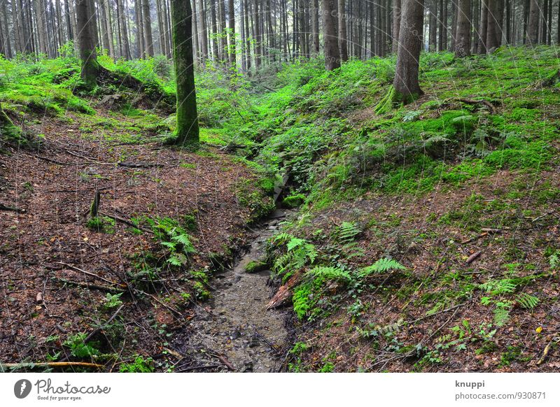 forest Environment Nature Landscape Plant Earth Water Sunlight Autumn Climate Climate change Beautiful weather Tree Fern Leaf Foliage plant Wild plant Forest