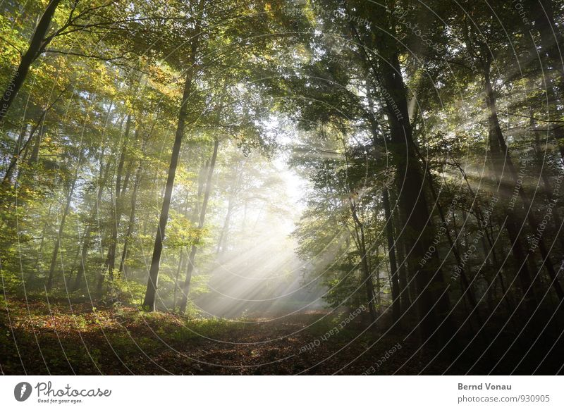 ray of hope Beautiful Sun Hiking Nature Autumn Warmth Tree Forest Lanes & trails Strong Moody Radiation Radial Intensive Autumn leaves To go for a walk