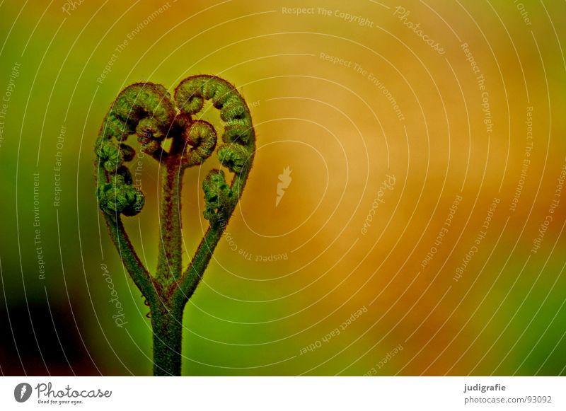 Nature Green Plant Life Power Heart Growth Fist Shoot Pteridopsida Flourish Plantlet Convoluted
