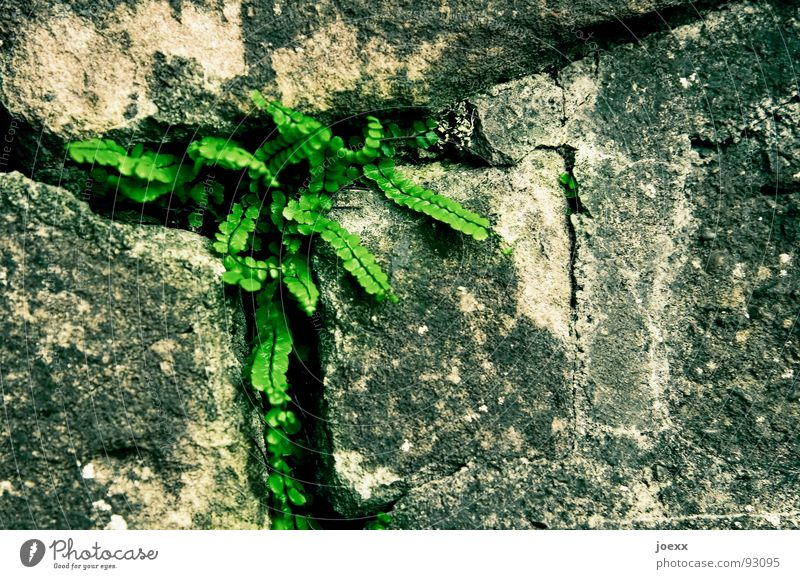 Nature Old Green Plant Life Wall (building) Gray Stone Wall (barrier) Rock Desire Joie de vivre (Vitality) Derelict Narrow Furrow Seam