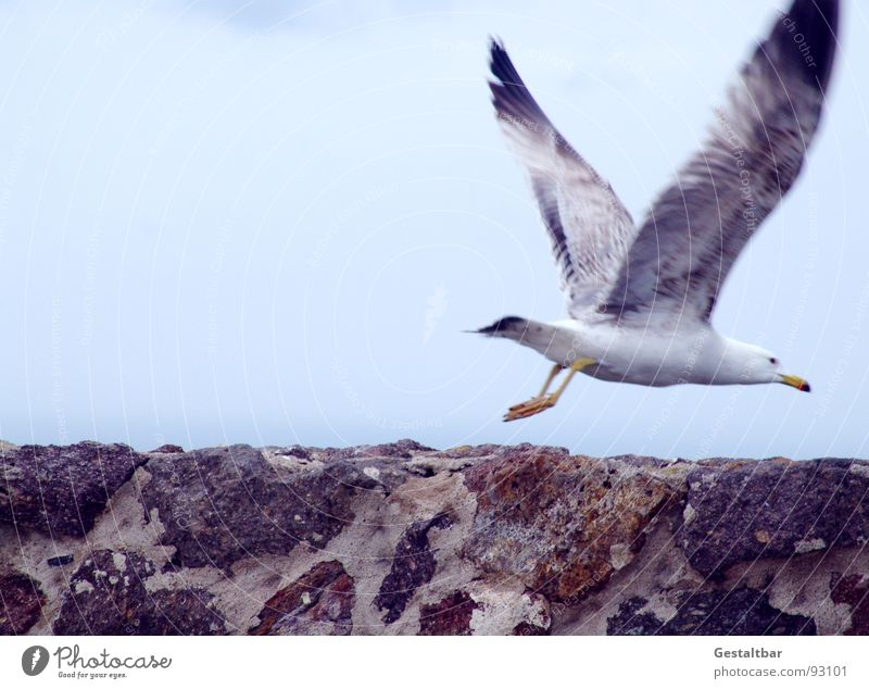 Sky Clouds Movement Freedom Happy Stone Wall (barrier) Bird Flying Beginning Aviation Wing Seagull Bad weather Disperse Formulated