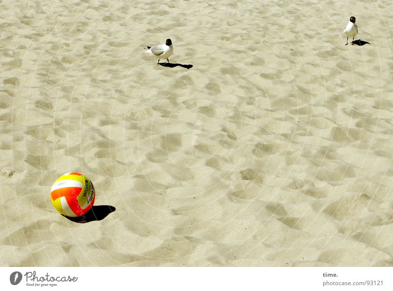 Unplayable, says Jonathan Shadow Leisure and hobbies Playing Beach Ball Sand Field Bird Curiosity Playing field Penalty kick seagull unplayable