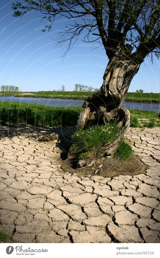 Climate as such is not yet a catastrophe Tree To dry up Badlands Wood Plain Beautiful weather Grass Low tide Riverbed Spring Cold Damp Drought Field Transience