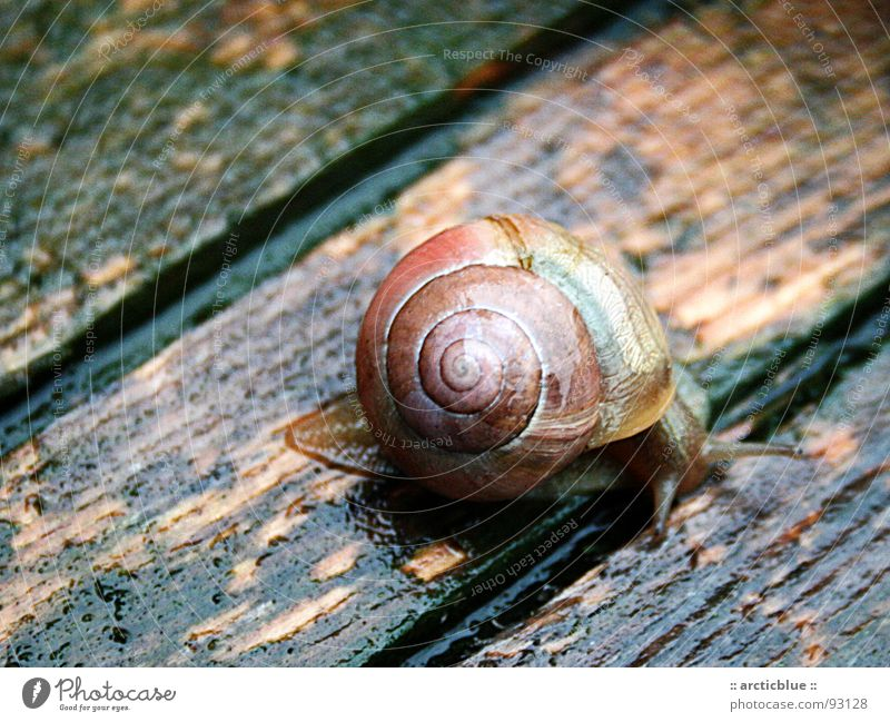 Existence on the Abyss Clump of trees Wet Wood Splinter Multicoloured Dazzling Slowly Smoothness Algae Stripe Edge Snail shell House (Residential Structure)