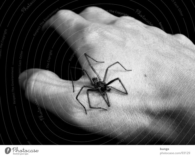 After the killer tadpoles... Hand Fingers Man Spider Panic Disgust Scared Dark Black White Fear house spider arachnaphobia Legs phalangeal bone Gloomy