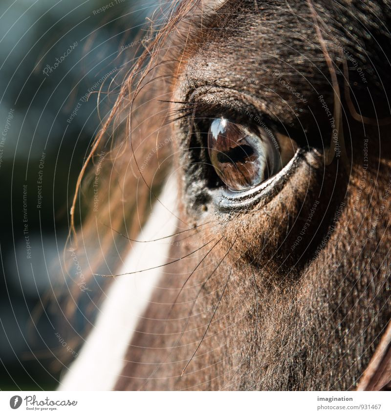 Calm Animal Eyes Brown Contentment Horse Trust Farm animal