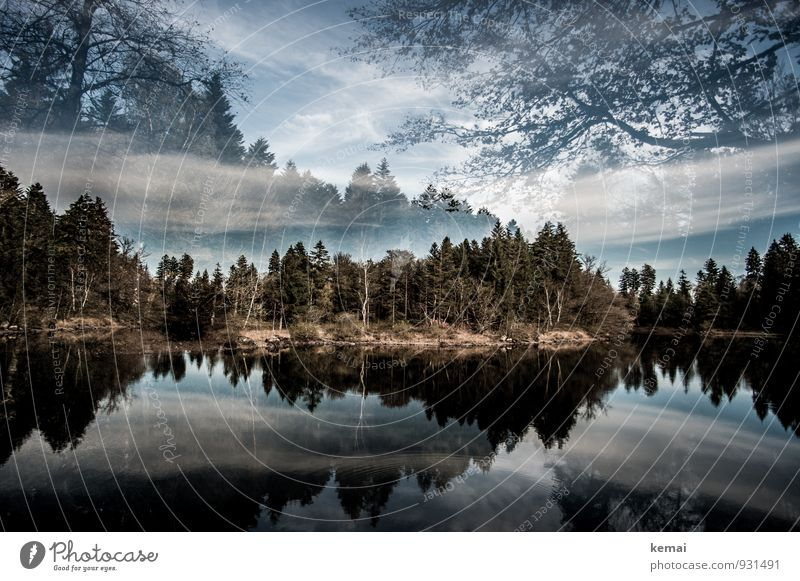 Sky Nature Plant Water Tree Loneliness Landscape Calm Clouds Forest Autumn Freedom Lake Bushes Beautiful weather Lakeside