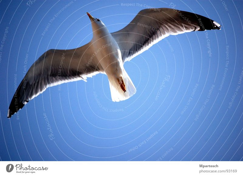Boundless freedom Seagull Glide Go up Infinity Bird Air Warmth Freedom Blue Sky Flying exit