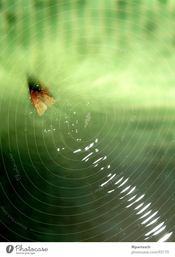 Water skiing in a different way Green Butterfly Moth Speed Swimming pool Waves Swimming & Bathing
