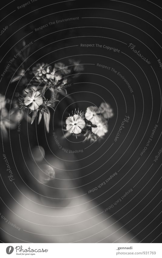 still-a-life Flower Truth Calm Still Life Corner Sadness Black & white photo Copy Space right Light Shadow Contrast Silhouette Reflection