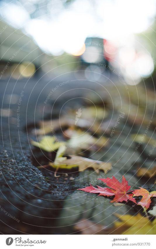 Red Leaf Autumn Lie Observe Asphalt