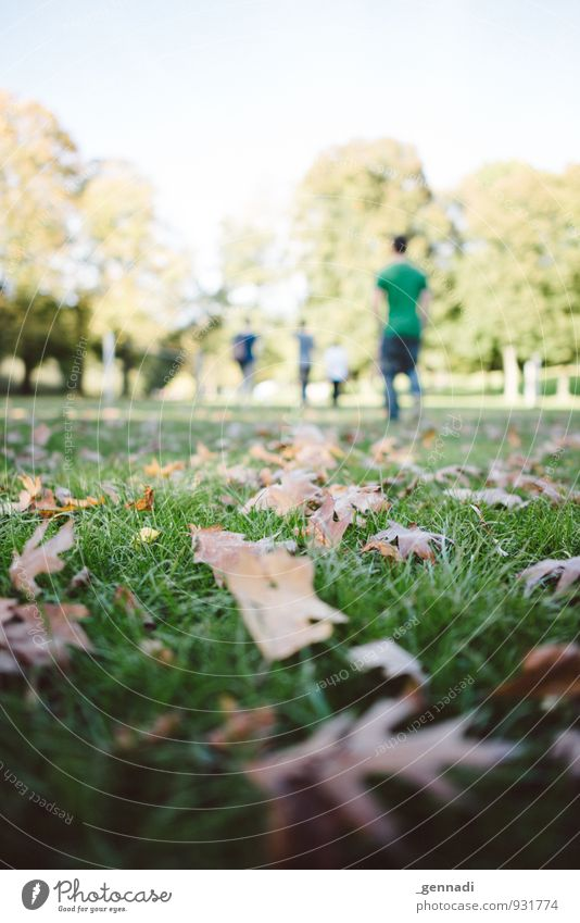 Autumn comes Group Grass Warm-heartedness Autumnal Autumn leaves Leaf Going Floor covering Meadow Knoll Leave behind Lanes & trails Colour photo Exterior shot