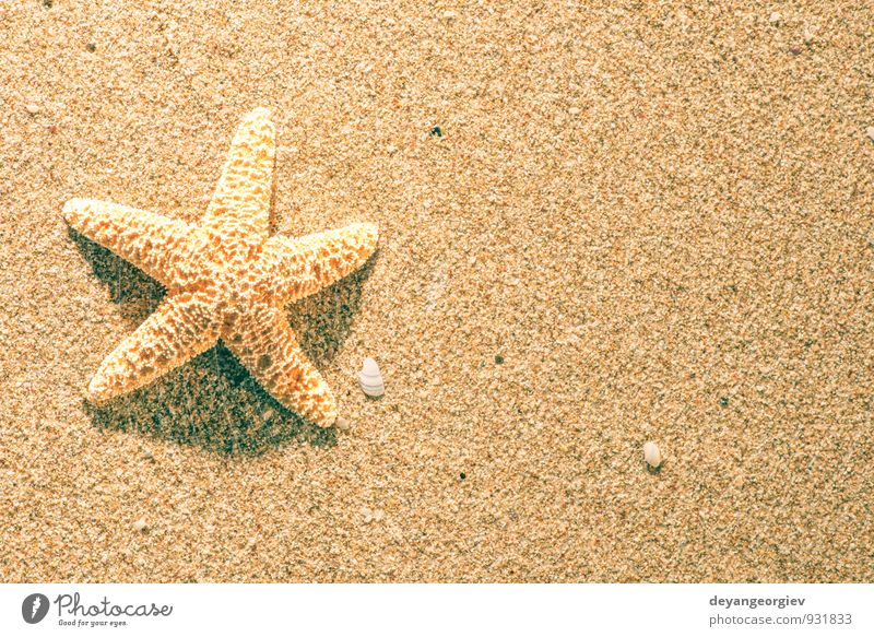 Sunrise on the beach Beautiful Relaxation Leisure and hobbies Vacation & Travel Tourism Summer Beach Ocean Nature Sand Sky Coast Blue Idyll Starfish star water