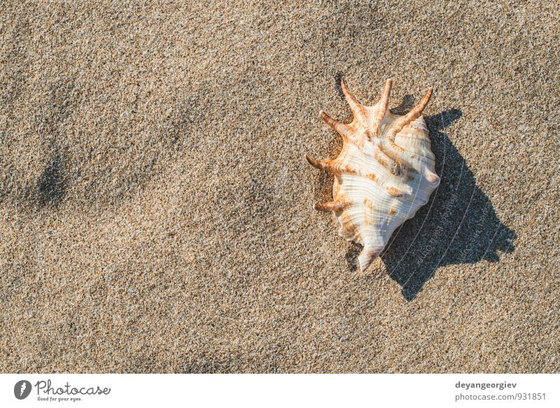 Shells on the beach Sky Nature Vacation & Travel Blue White Summer Sun Relaxation Ocean Landscape Beach Coast Sand Idyll Waves Tourism