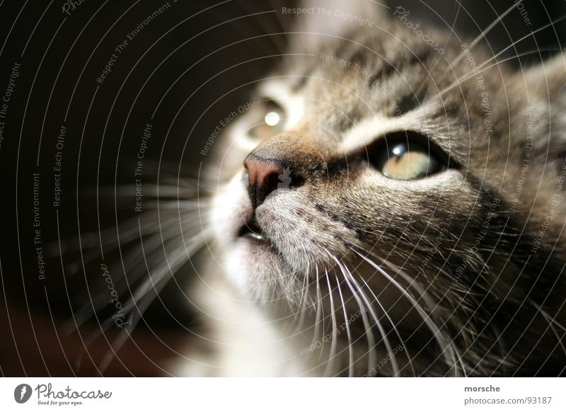 kitschy Cat Longing Whisker Landscape format Mammal Looking Eyes fascinated Close-up Contrast Nose