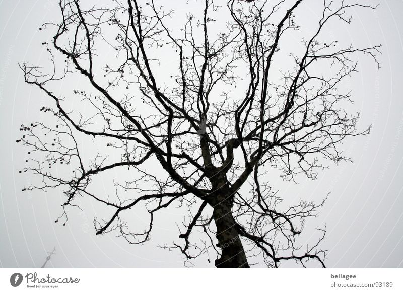 Sky Tree Winter Gray Rain Gloomy Branch Leafless