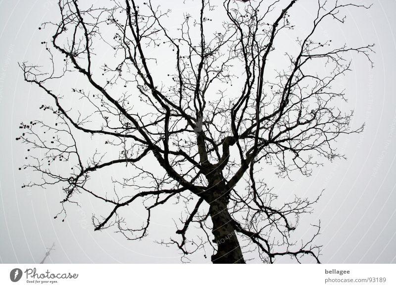 Tree crown in winter Gloomy Gray Winter Leafless Sky Branch kichturm peak Rain