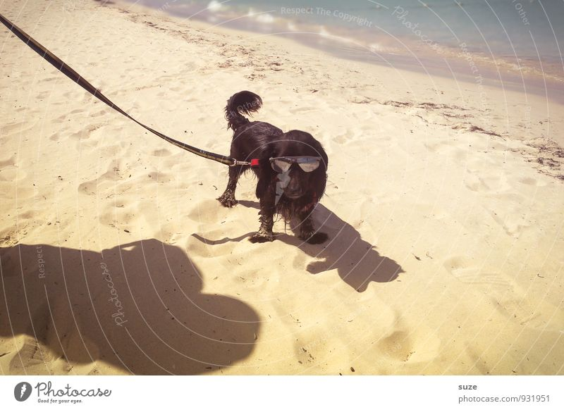 Dog Vacation & Travel Summer Ocean Joy Animal Beach Coast Funny Style Small Sand Fashion Lifestyle Leisure and hobbies Joie de vivre (Vitality)