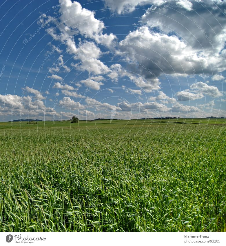 Life Field Hope Grass Horizon Clouds Sky Bad weather Calm Loneliness Serene Landscape Wide angle Green Background picture Nutrition Provision Infinity Railroad