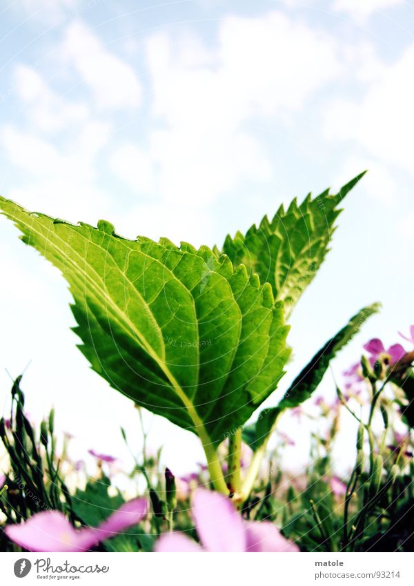 Nature Sky Sun Green Plant Summer Leaf Meadow Spring Garden Growth Blossoming Juicy Lovely Leaf green