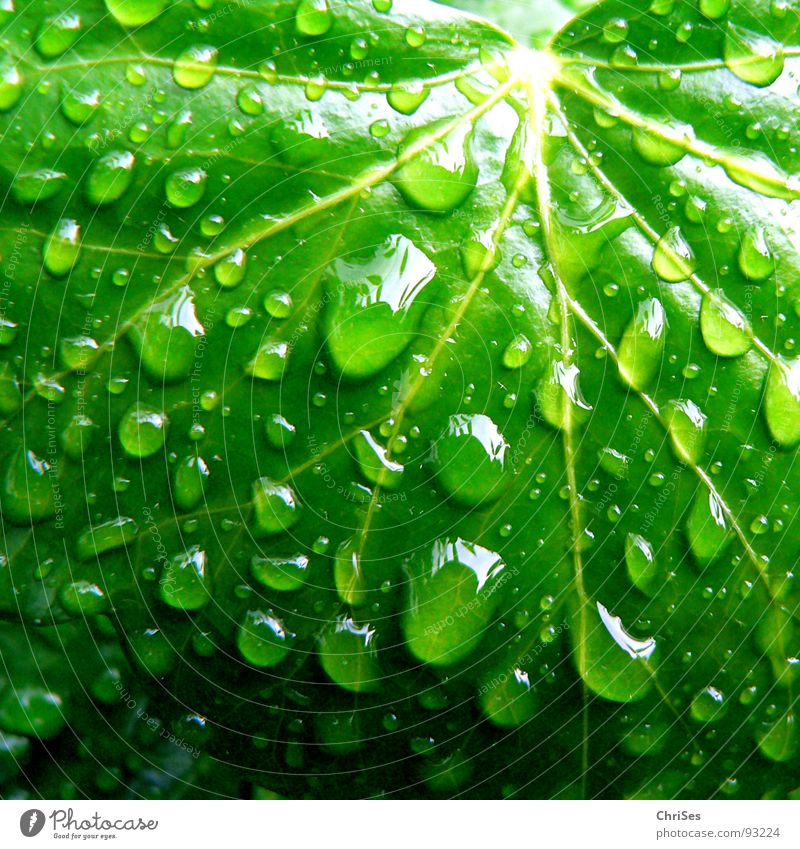 Nature Water Green Plant Leaf Spring Rain Drops of water Wet Bathroom Damp Botany Ivy Foliage plant Creeper