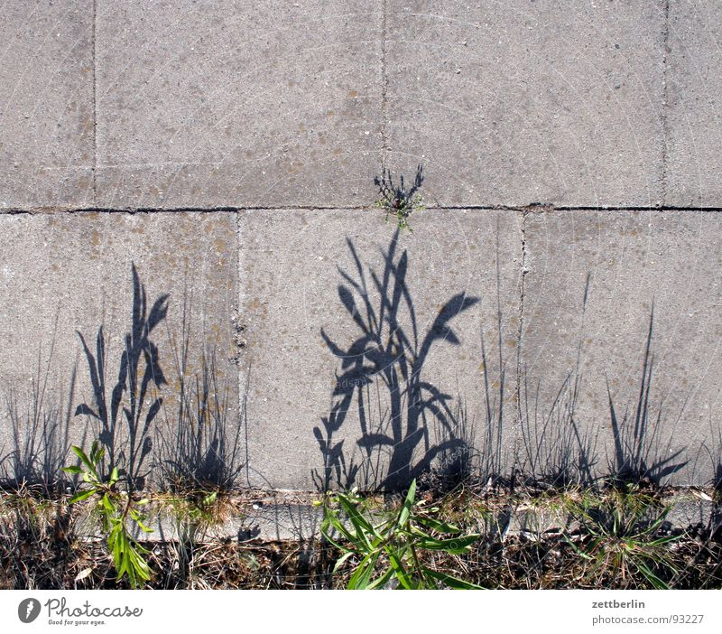 Peripheral zone {f} = fringe Edge Sidewalk Plant Grass Concrete Seam Traffic infrastructure Stone Minerals Lanes & trails Shadow To go for a walk Paving tiles