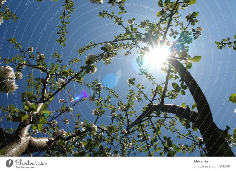 flower canopy Sun Blossom Flower Tree Spring April May Sky blue Physics Leaf Fresh Blue Warmth vernally Branch