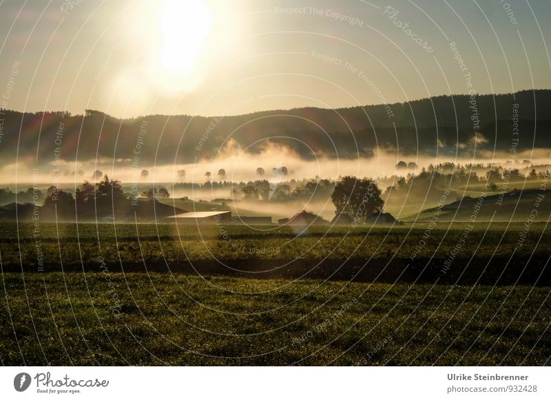 Fog Rolls 1 Environment Nature Landscape Plant Air Water Cloudless sky Autumn Weather Beautiful weather Tree Grass Bushes Field Forest Hill Building Farm Roof