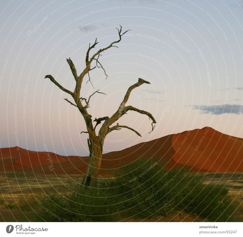 Tree Loneliness Death Sand Africa Desert Thin Hot Dry Beach dune Respect Harmonious Dust Skeleton Colossus Namibia