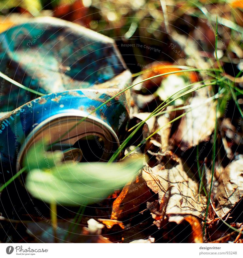civilization Tin Coke can Beer can Trash Throw away Environment Environmental pollution Leaf Grass Cola Nature Wood flour tin plate jettisoned Blue beer