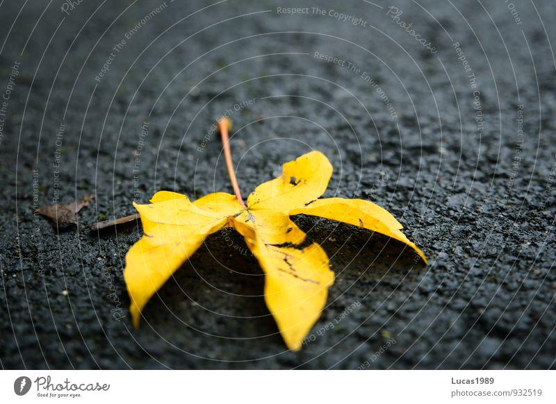Leaf Black Yellow Street Autumn Concrete Pavement