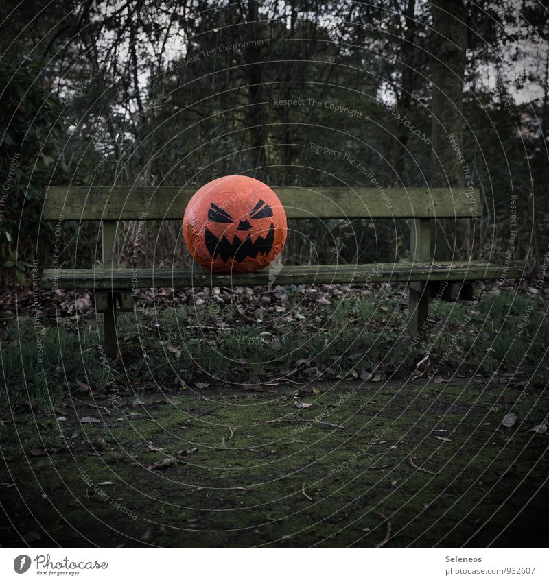Happy Halloween Hallowe'en Environment Nature Autumn Plant Tree Garden Park Creepy Fear Horror Pumpkin pumpkin head Bench Park bench Carpet of moss Colour photo
