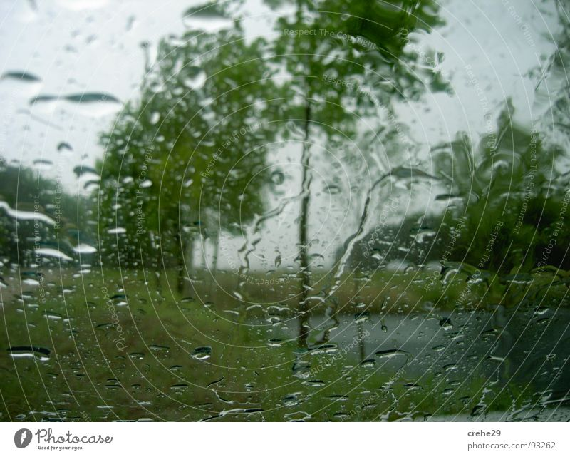 showery weather Tree Spring Plant Refreshment Green Gale Nature Weather Rain Drops of water Thunder and lightning Water